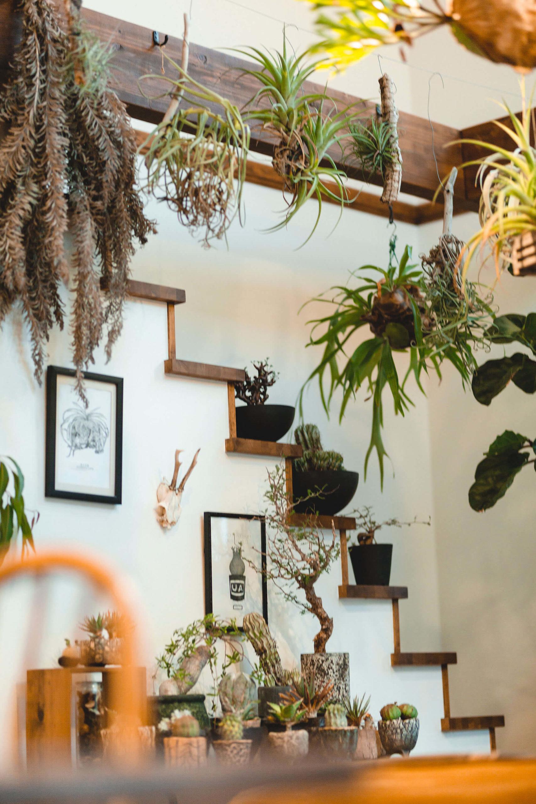 植物がいっぱいのリビング階段