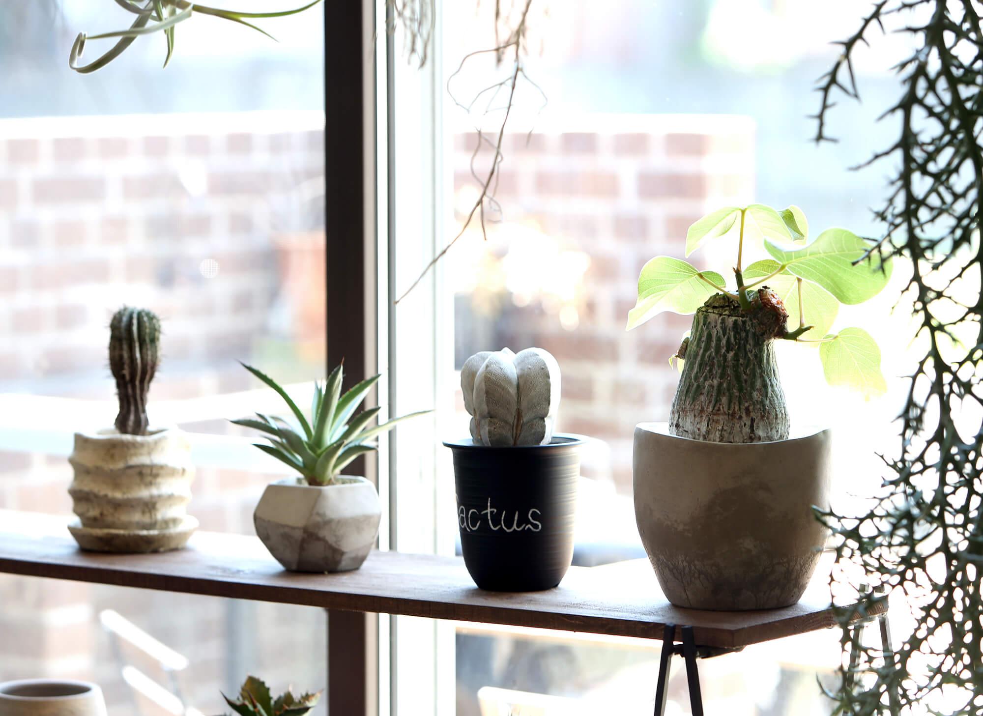 植物が映える家